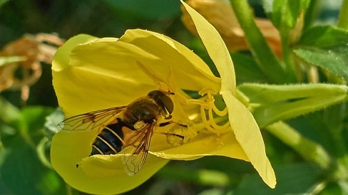 hình tô màu con ong đẹp