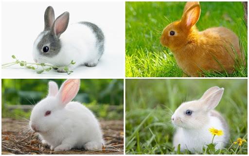 màu sắc con thỏ