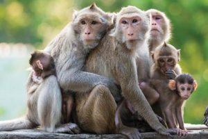 gia đình con khỉ