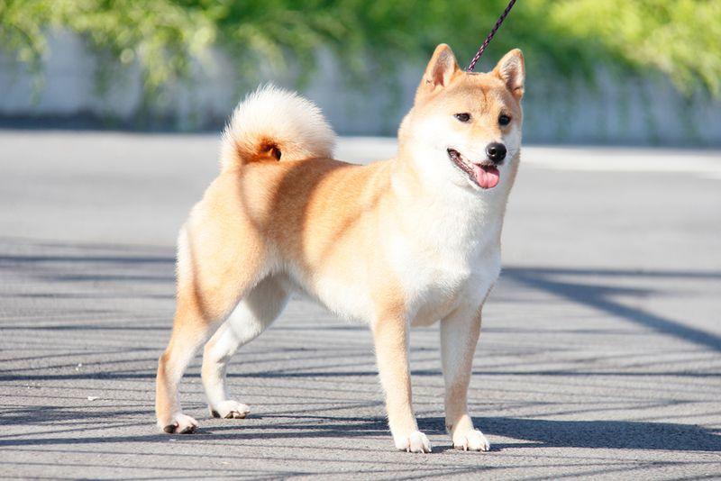 hình ảnh con chó