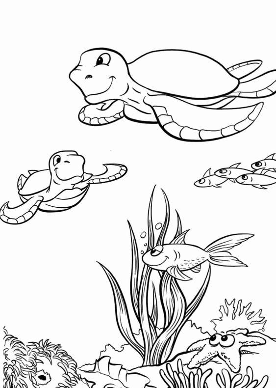 hình con rùa tô màu