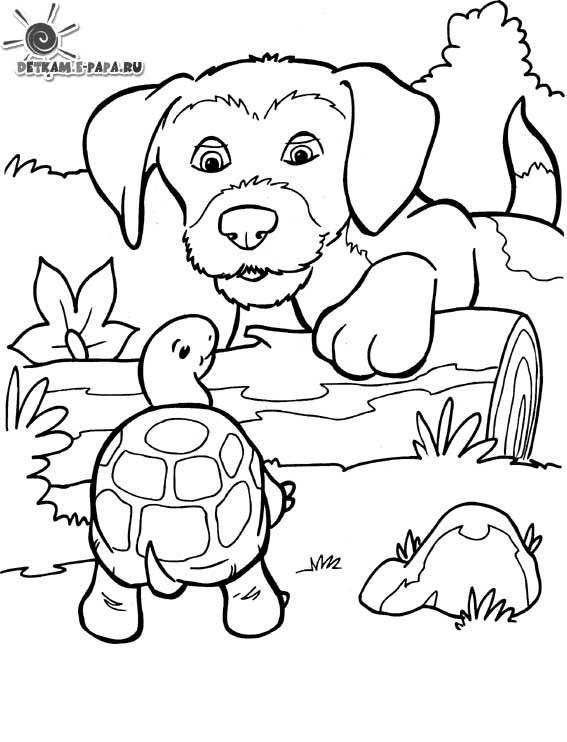 hình tô màu con rùa đẹp