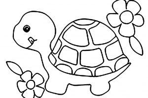 tranh cho bé tô màu con rùa
