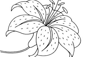 tranh tô màu hoa loa kèn