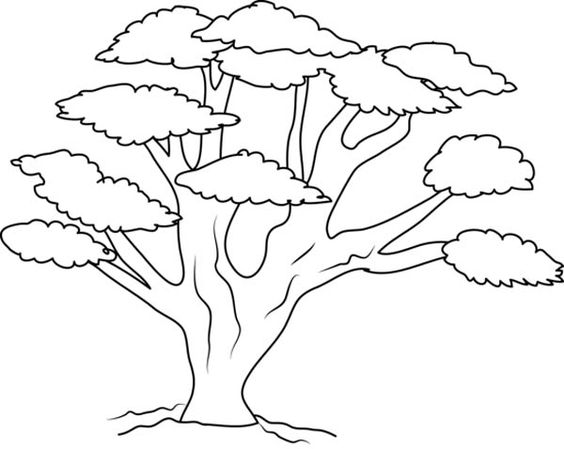 Tranh tô màu cây đa