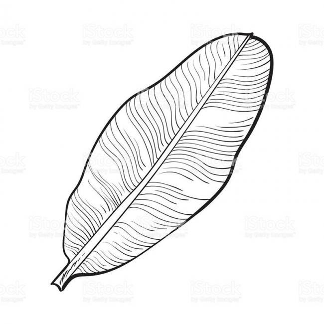 tranh tô màu chiếc lá bàng