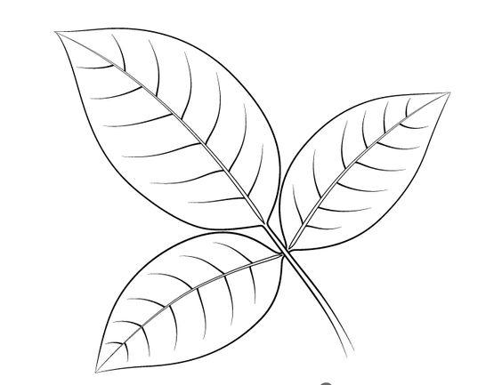 tranh tô màu chiếc lá