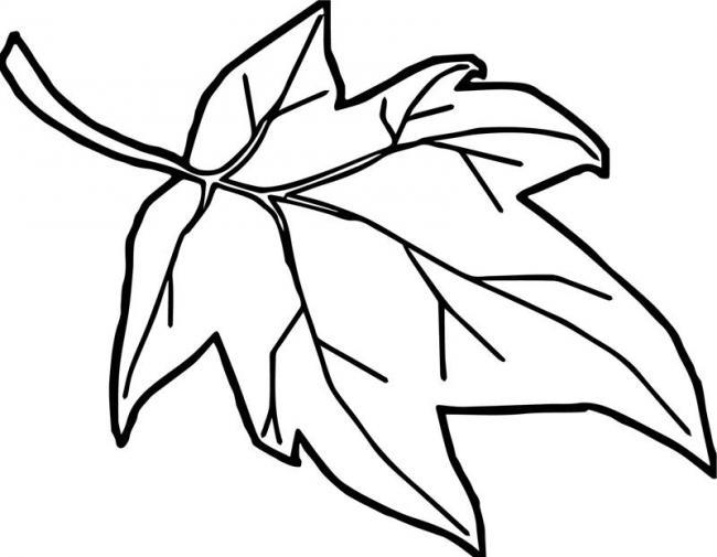 tranh tô màu chiếc lá đẹp