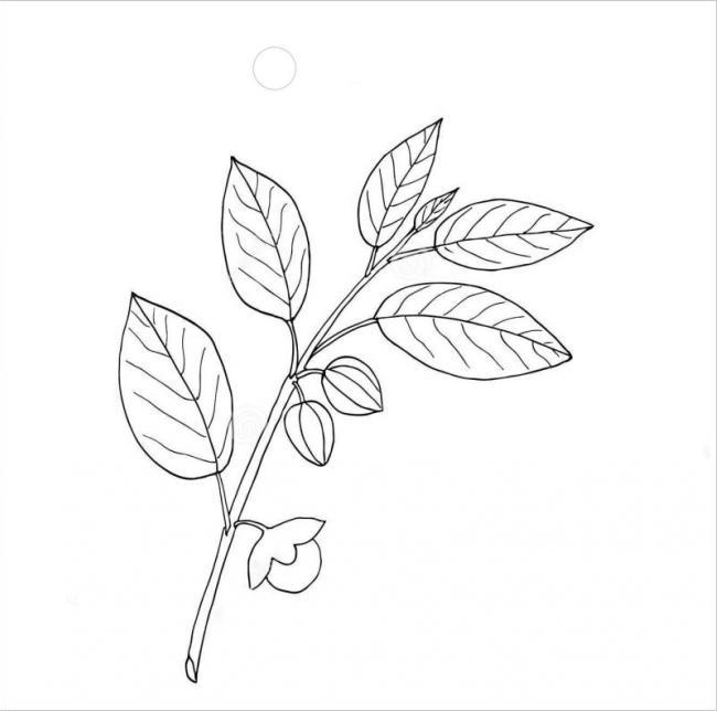 tranh tô màu chiếc lá cho bé tập tô