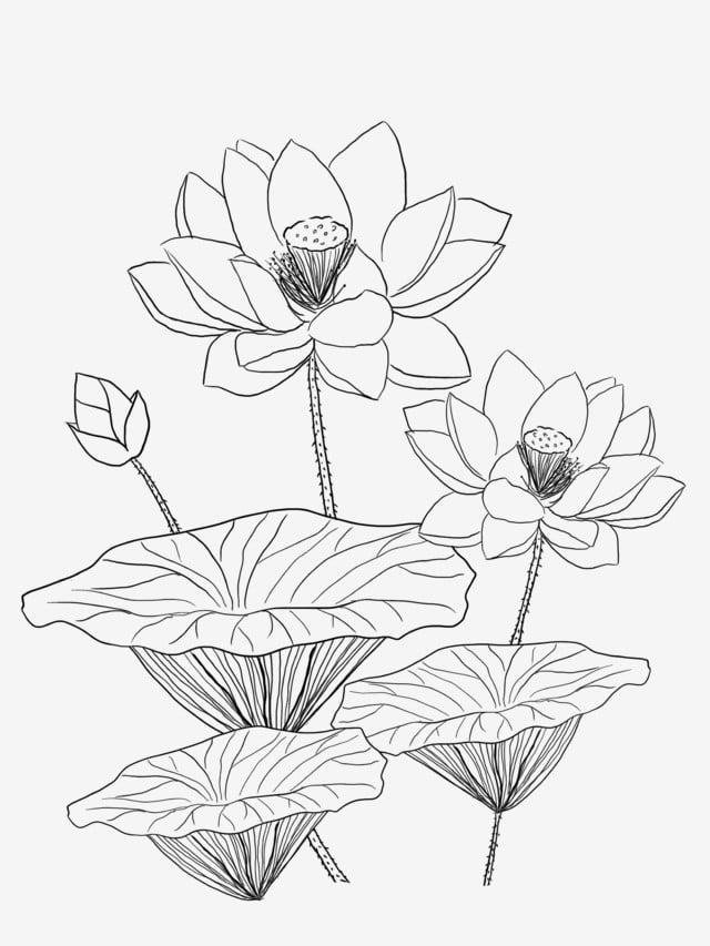 tranh tô màu chiếc lá sen